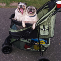 Zoe and Harley_Stroller